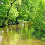 Rzeka Mierzawa