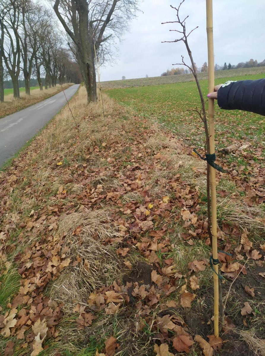 Gmina Sędziszów posadziła rośliny miododajne