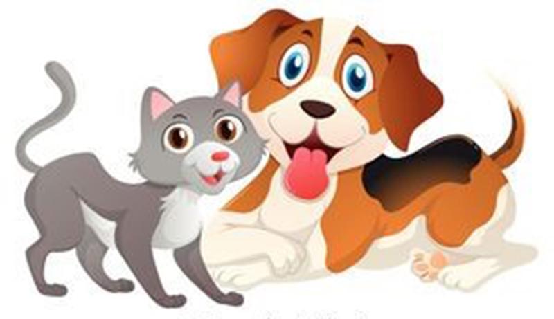 Nabór wniosków na dofinansowanie zabiegów kastracji lub sterylizacji psów i kotów z terenu Gminy Sędziszów