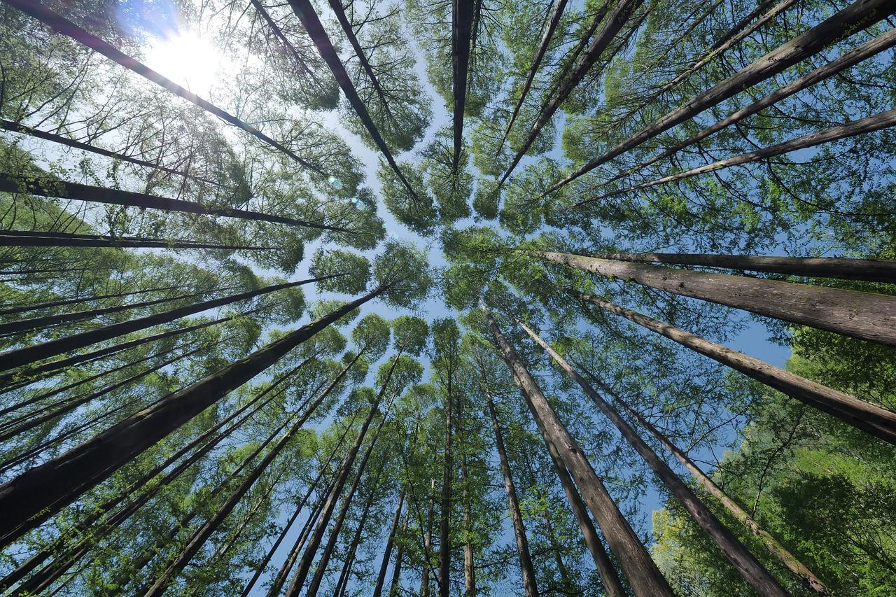 Informacja dla właścicieli lasów niestanowiących własności Skarbu Państwa